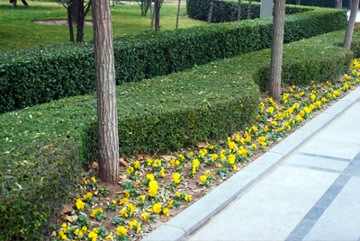 Landscaping in Bexley OH