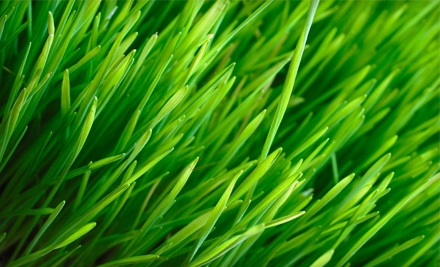 Lawn Care in Bexley OH