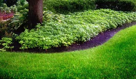 Lawn Care in Pickerington OH