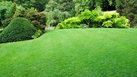 Lawn Care in Powell OH