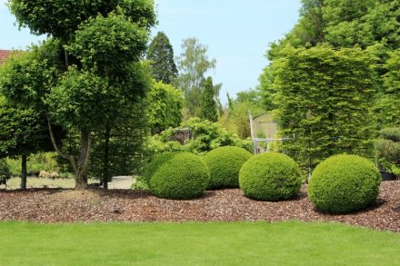 Lawn Care in Worthington OH